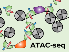 ATAC-seq Regulator Elements in Cancer