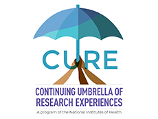 CURE | Continuing Umbrella of Research Experiences | A Program of the National Institutes of Health