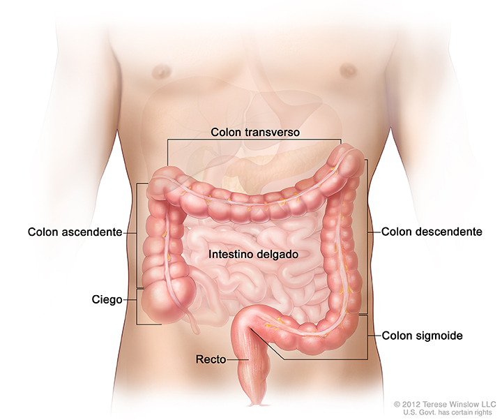 Classification BI-RADS - depistageseinca