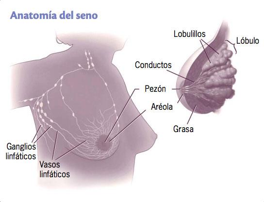 4 tips para caricias en senos Salud180