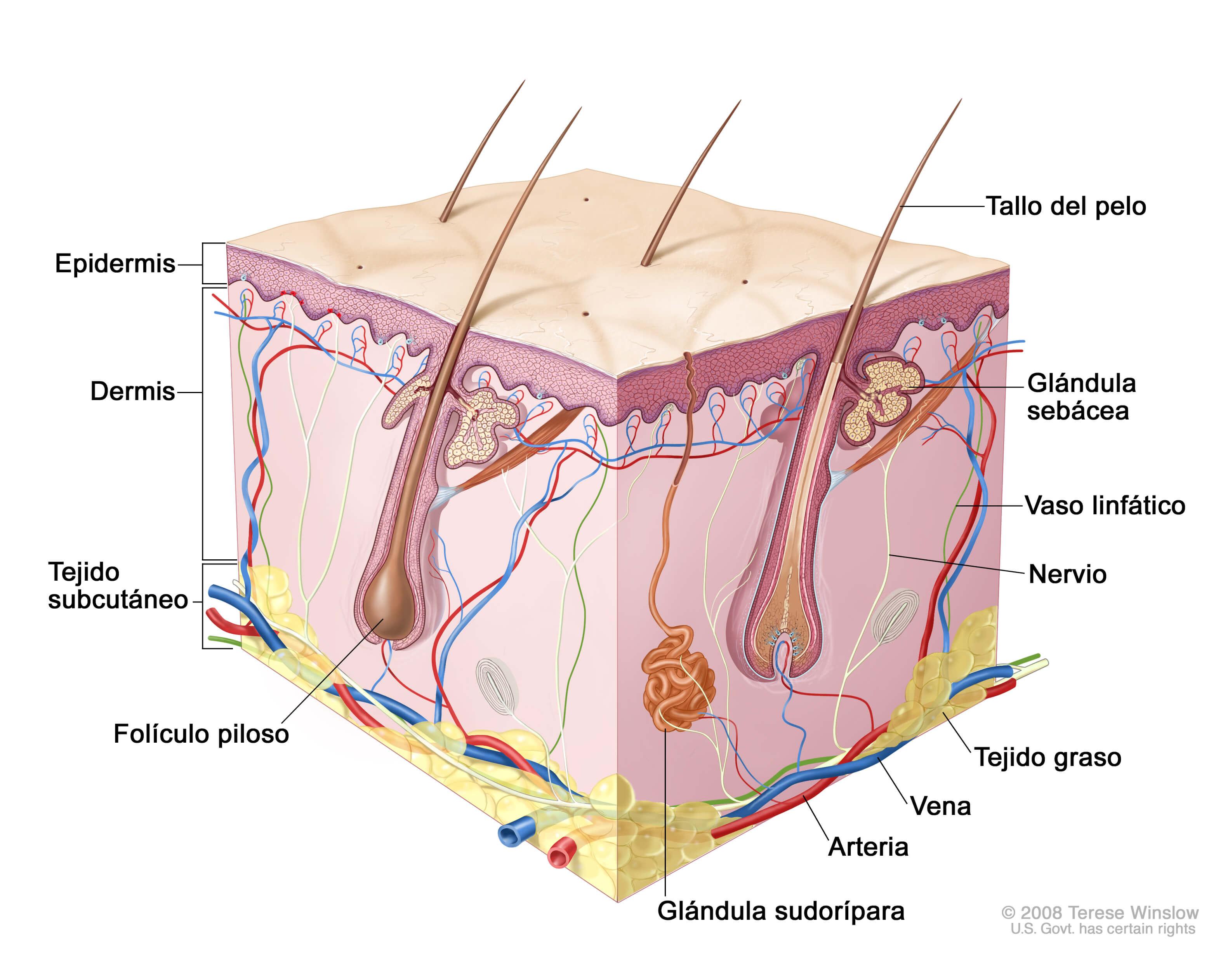 La berza marina al acné