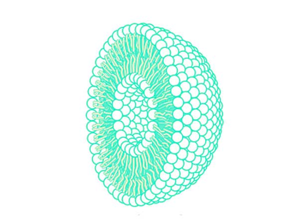 Cross section of a liposome