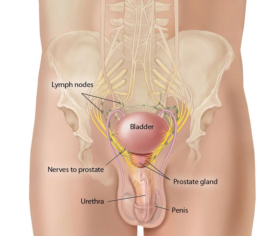 sex facts prostata massasje