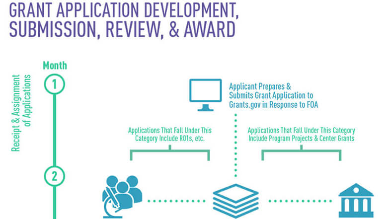 NCI Grants Application Development, Submission, Review, and Award Infographic