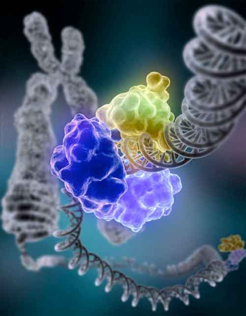 Illustration of an enzyme encircling a strand of DNA