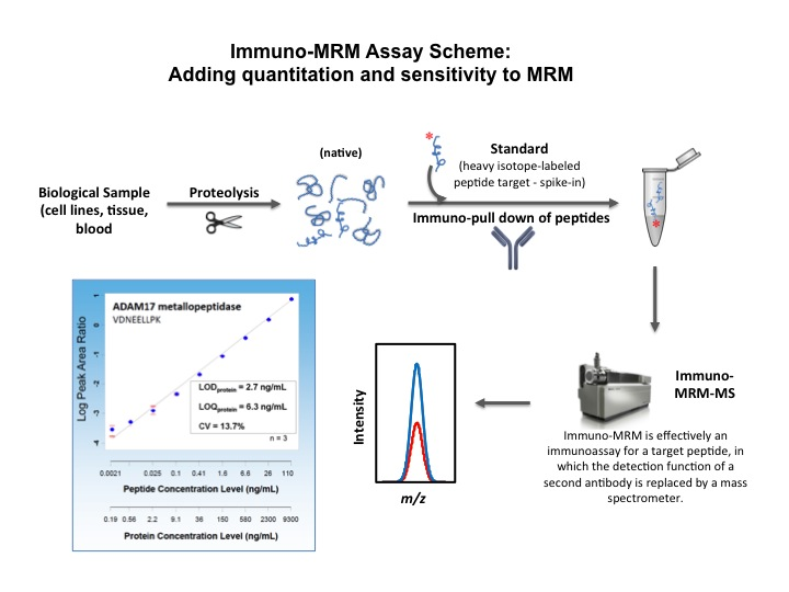 Quantitative Mass Spectrometry of Peptides using Immuno-MRM.