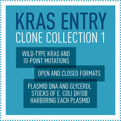 KRAS Entry Clone Collection 1 (Wild-type KRAS and 10 point mutations / Open and close formats / Plasmid DNA and glycerol stocks of E. coli DH10B harboring each plasmid)