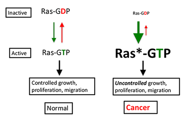 Diagram of the RAS Pathway