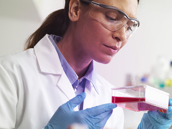 Female scientist examining cell culture