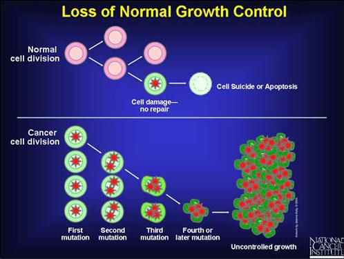 Химиопрепараты тормозящей деление раковых клеток называются
