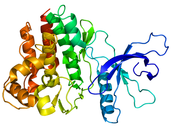 Structure of the JAK3 protein.