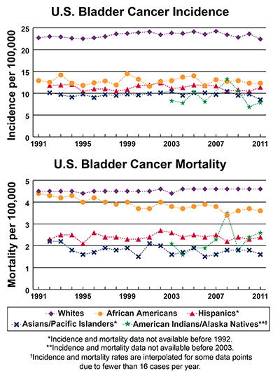 Line graphs showing U.S. Bladder Cancer incidence and mortality per 100,000, by race and ethnicity.  , Incidence from 1991-2011 and mortality from 1990-2010 is shown.  In 2011, whites have the highest incidence followed by African Americans, Hispanics, Asians/Pacific Islanders and American Indians/Alaska Natives.  In 2010, whites have the highest mortality, followed by African Americans, American Indians/Alaska Natives, Hispanics, and Asians/Pacific Islanders.