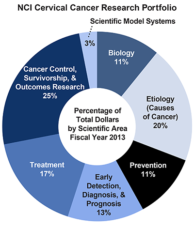 Pie chart of NCI Cervical Cancer Research Portfolio.  Percentage of total dollars by scientific area.  Fiscal year 2013.  Biology, 11%.  Etiology/causes of cancer, 20%.  Prevention, 11%.  Early detection, diagnosis, and prognosis, 13%.  Treatment, 17%.  Cancer control, survivorship, and outcomes research, 25%.  Scientific model systems, 3%.