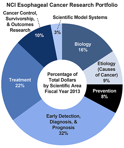 Pie chart of NCI Esophageal Cancer Research Portfolio.  Percentage of total dollars by scientific area.  Fiscal year 2013.  Biology, 16%.  Etiology/causes of cancer, 9%.  Prevention, 8%.  Early detection, diagnosis, and prognosis, 32%[CS1] .  Treatment, 22%.  Cancer control, survivorship, and outcomes research, 10%.  Scientific model systems, 3%.
