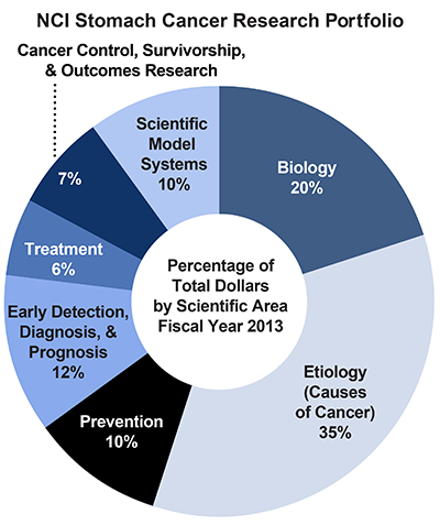 Pie chart of NCI Stomach Cancer Research Portfolio.  Percentage of total dollars by scientific area.  Fiscal year 2013.  Biology, 20%.  Etiology/causes of cancer, 35%.  Prevention, 10%.  Early detection, diagnosis, and prognosis, 12%.  Treatment, 6%.  Cancer control, survivorship, and outcomes research, 7%.  Scientific model systems, 10%.