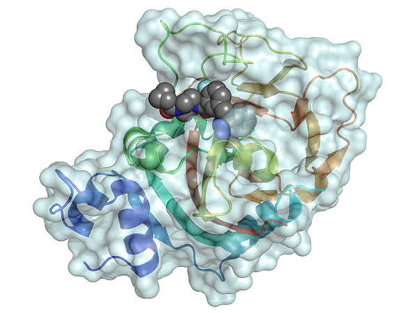 Model of the drug olaparib binding to part of the PARP1 enzyme in a cancer cell