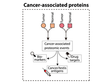 A schematic of the potential different uses for cancer-related proteins discovered through proteogenomic studies.