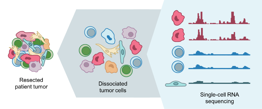 An illustration of how RNA sequencing is performed.