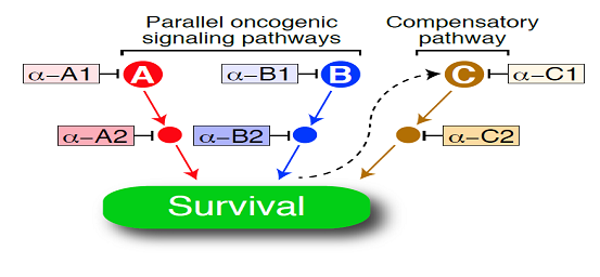 combination therapy diagram