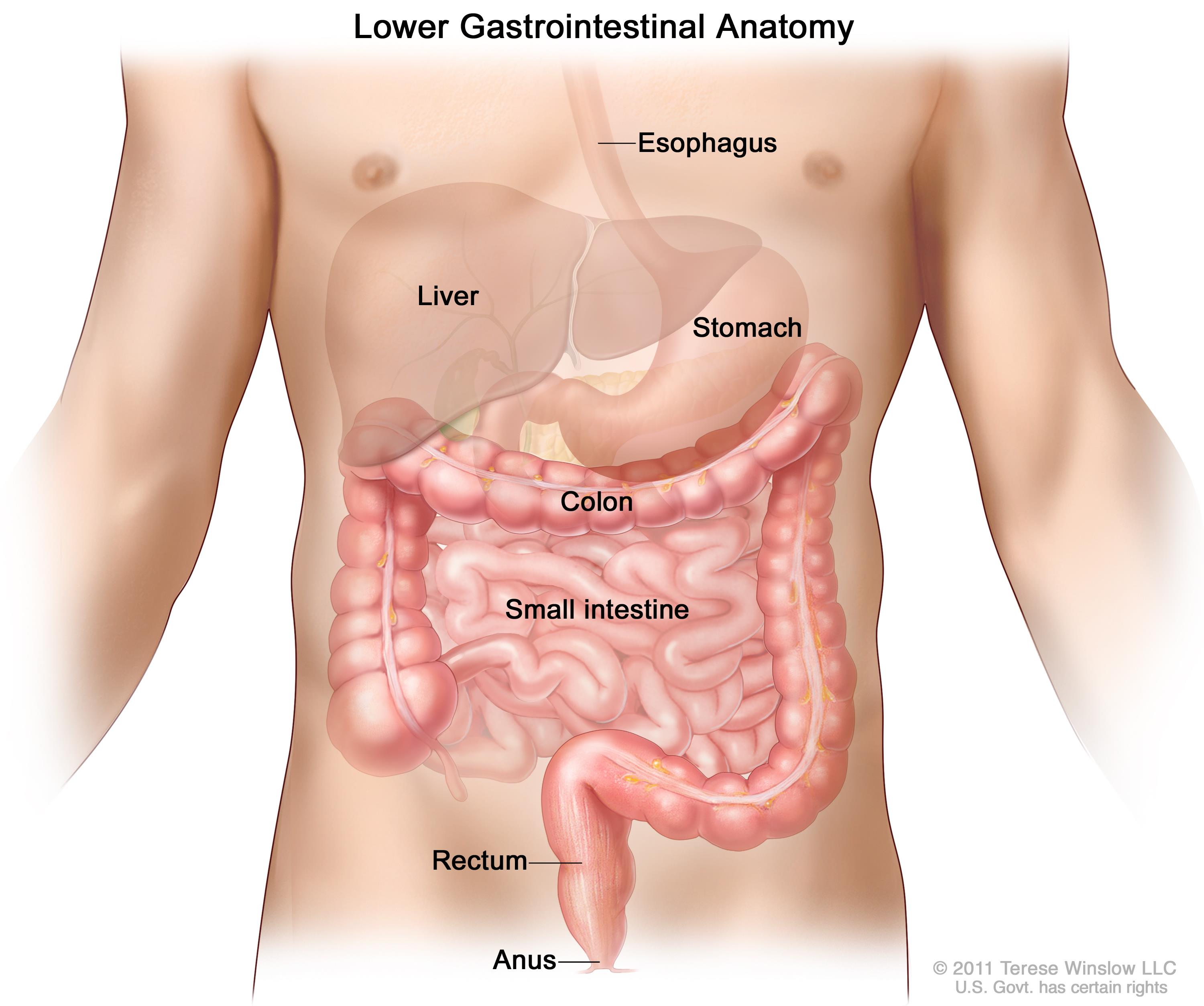 How to treat gastrointestinal diseases in young and adults