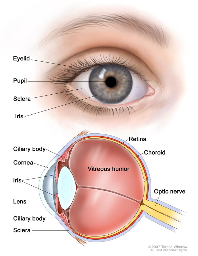 Definition Of Sclera Nci Dictionary Of Cancer Terms National