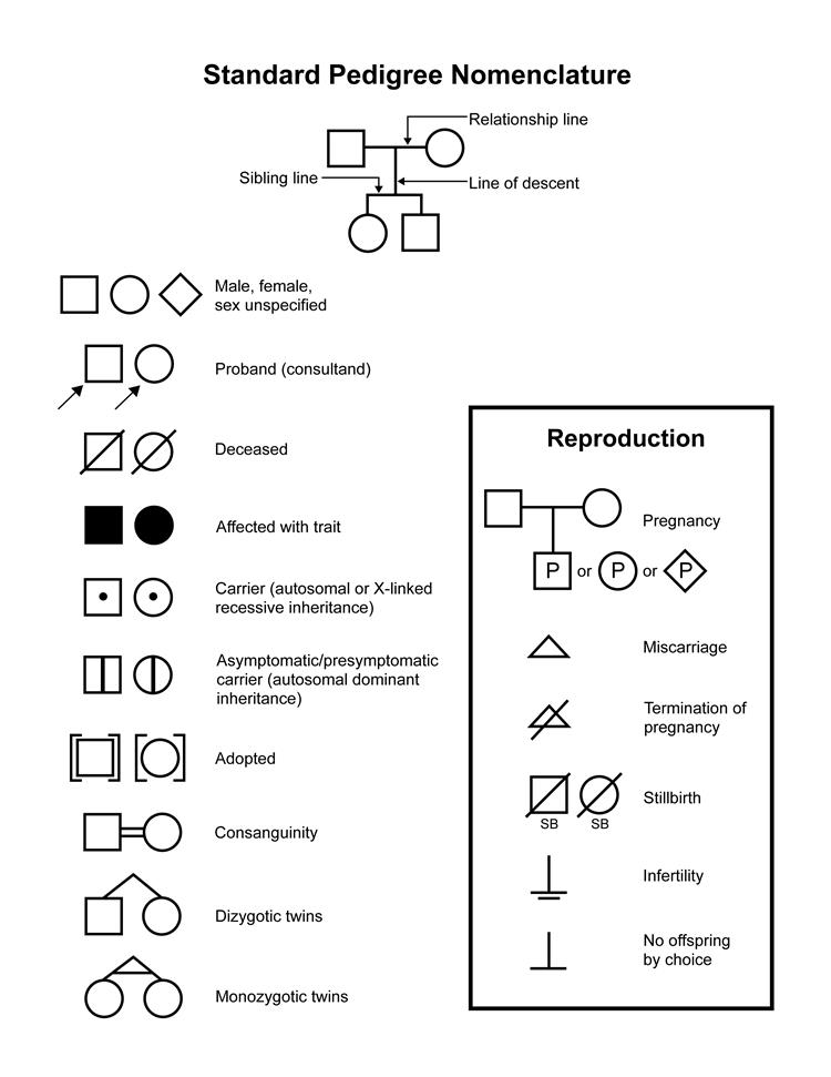 Standard pedigree nomenclature; diagram shows common symbols used to draw a pedigree.