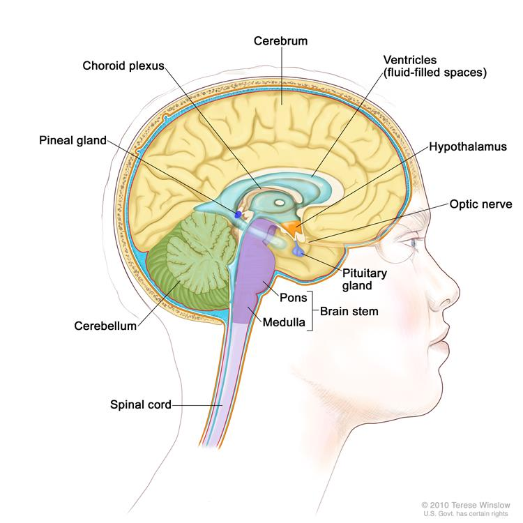 Pituitary Tumors Treatment (PDQ®)—Patient Version ...