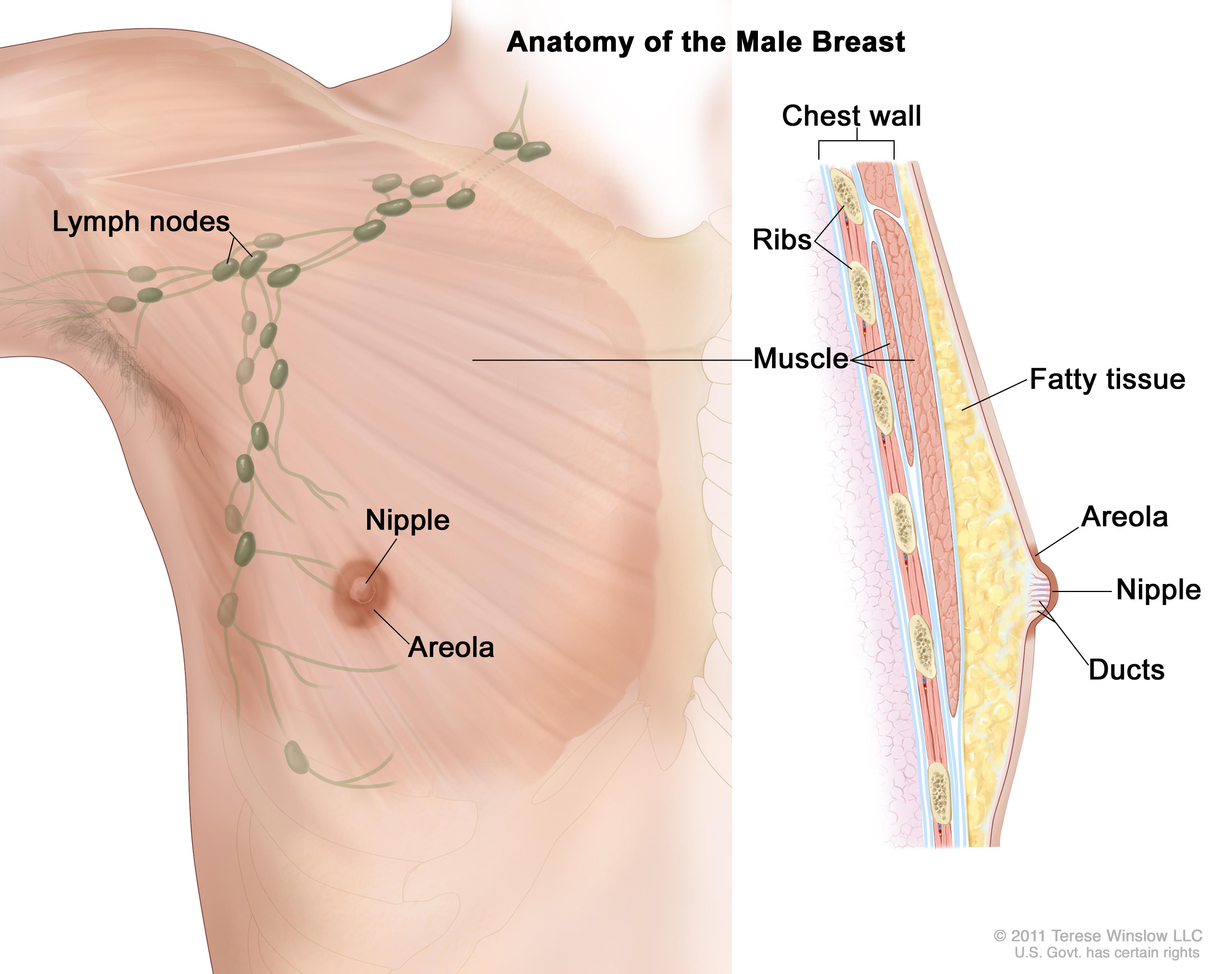Duct work in breast