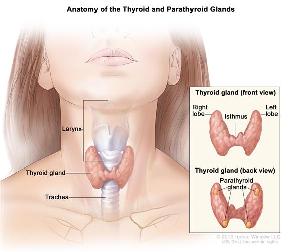 symptoms of thyroid trouble