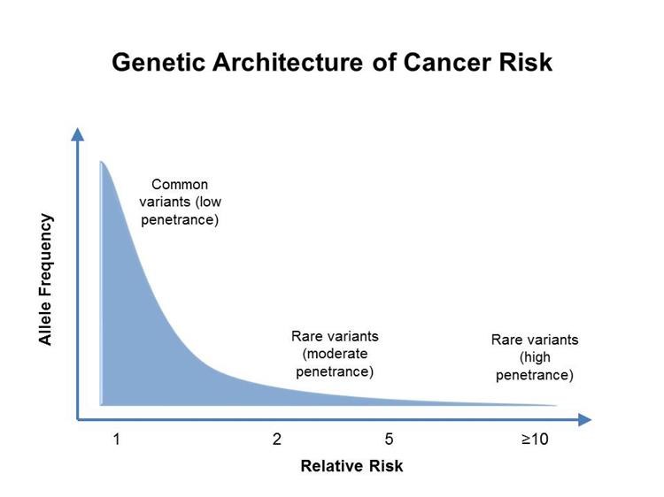 Graph shows relative risk on the x-axis and allele frequency on the y-axis. A line depicts the general finding of a low relative risk associated with common, low-penetrance genetic variants and a higher relative risk associated with rare, high-penetrance genetic variants.