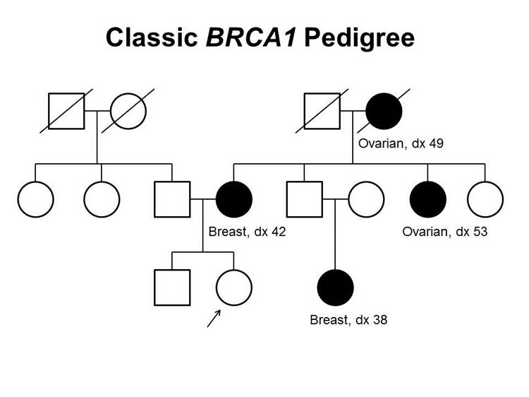 Enlarge Pedigree showing some of the classic features of a family with a  deleterious BRCA1 mutation across