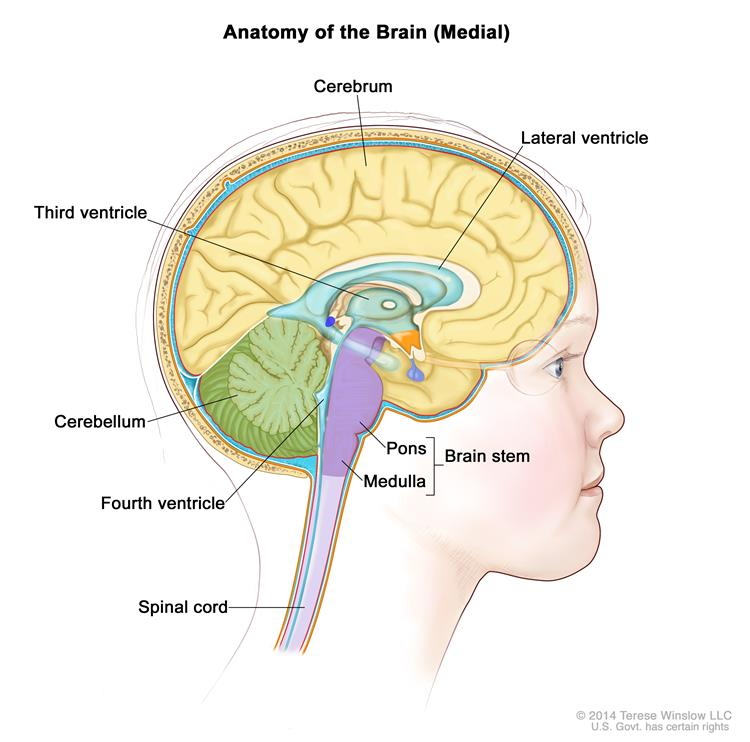 Childhood Ependymoma Treatment Pdqpatient Version National