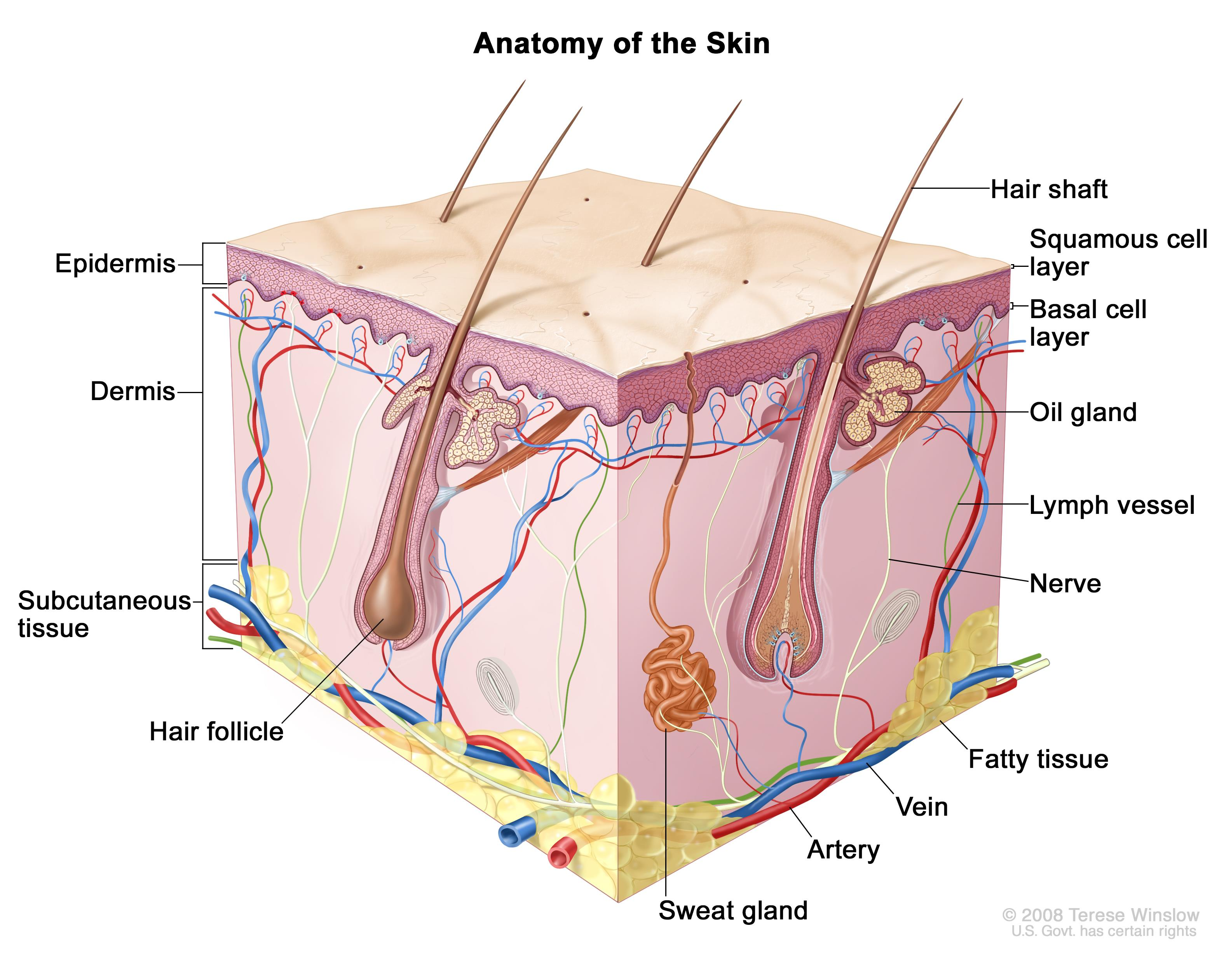Skin Cancer Treatment Pdqpatient Version National Cancer Institute