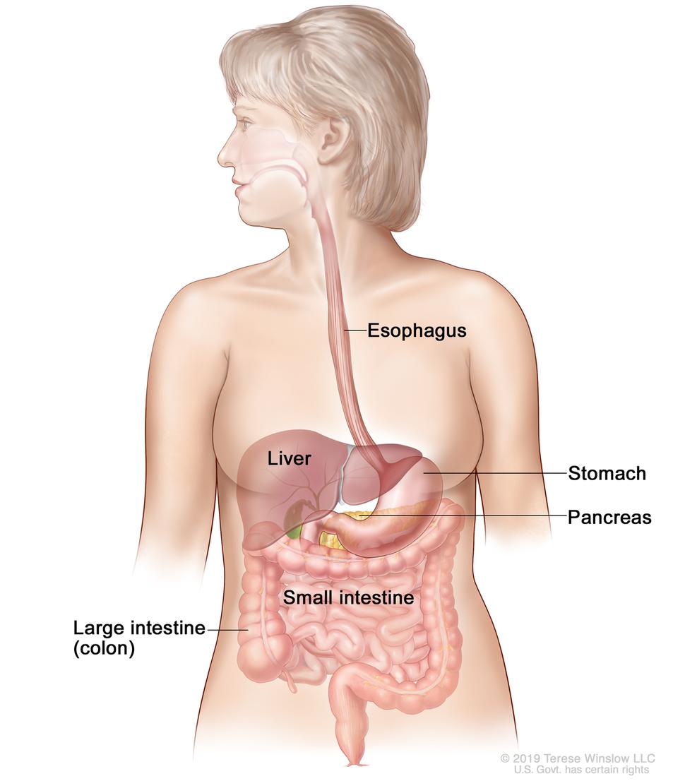 Paraziți apicomplexan Cancer gastrique sarcome