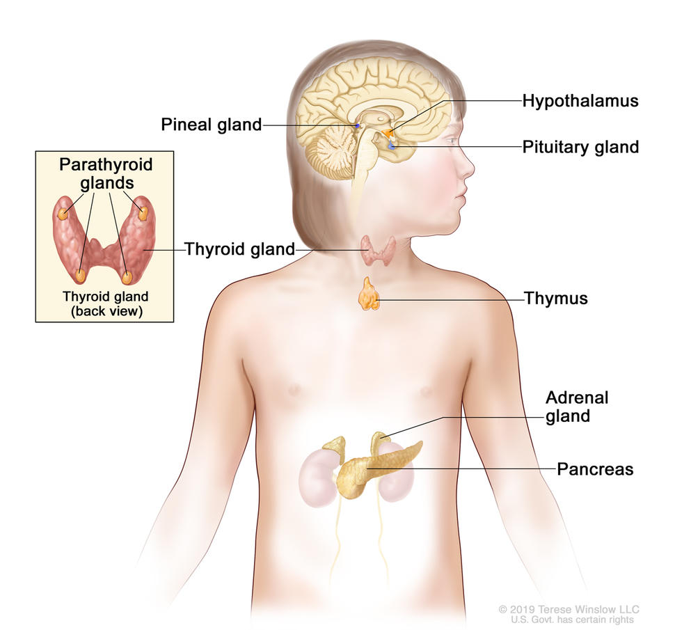 cancer endocrine system)