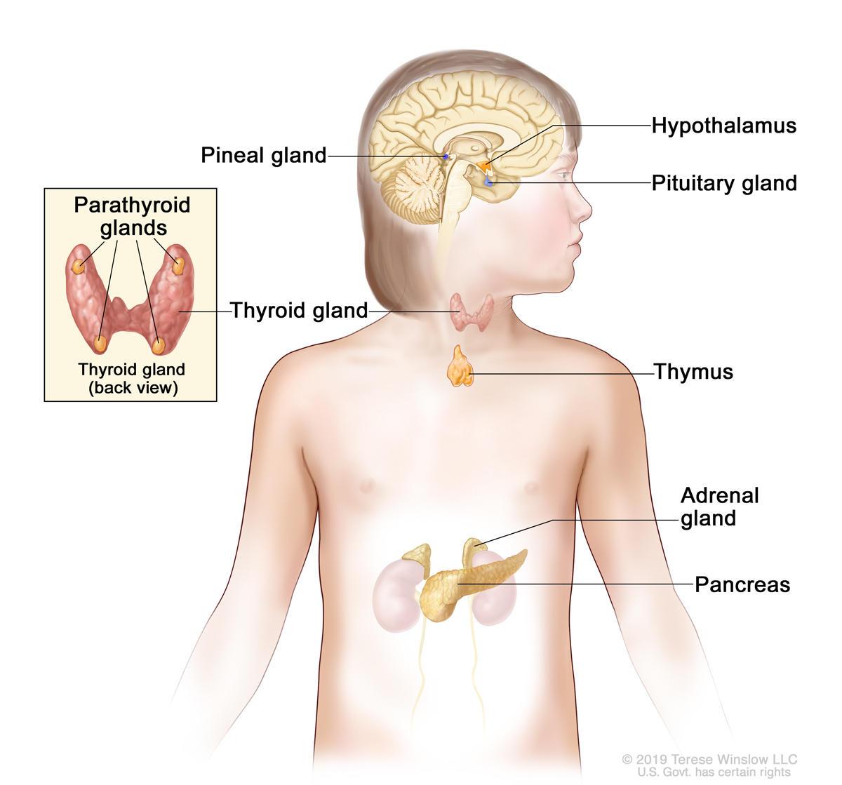 cancer affecting hormones virusi noi aparuti