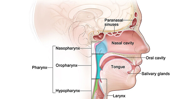 Head and Neck Cancer—Patient Version - National Cancer Institute