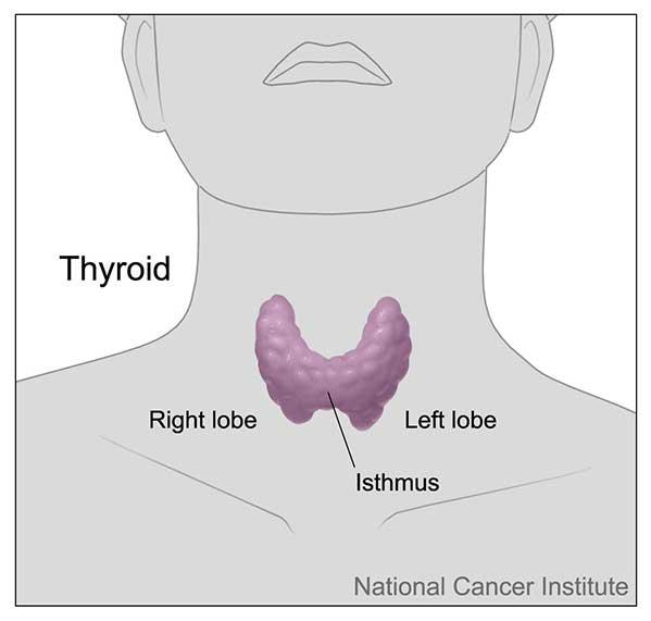 Test Identifies Thyroid Nodules That Don T Require Surgery