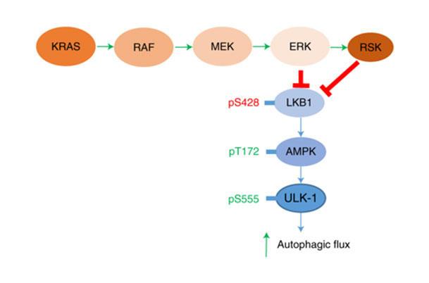 Hitting An Elusive Target In Pancreatic Cancer National