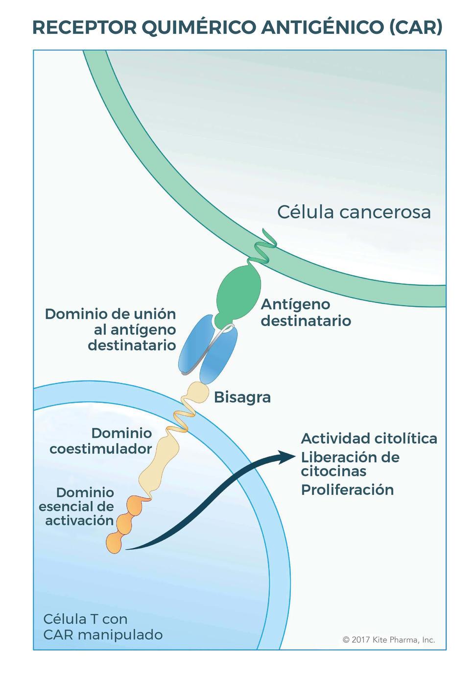 cancer de prostata y perdida de memoria