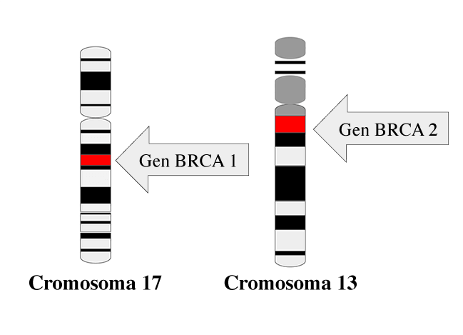 cromosoma de cáncer de próstata