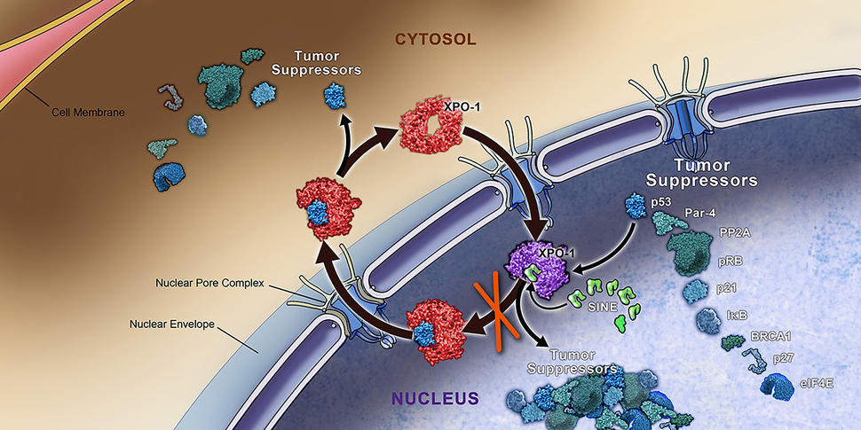 New Therapeutic Strategies in Lung Cancers