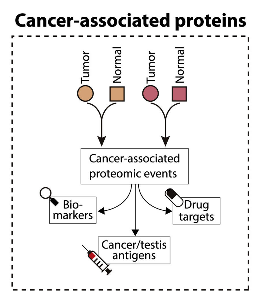 Proteogenomic Study Reveals New Details Of Colon Cancer National Cancer Institute