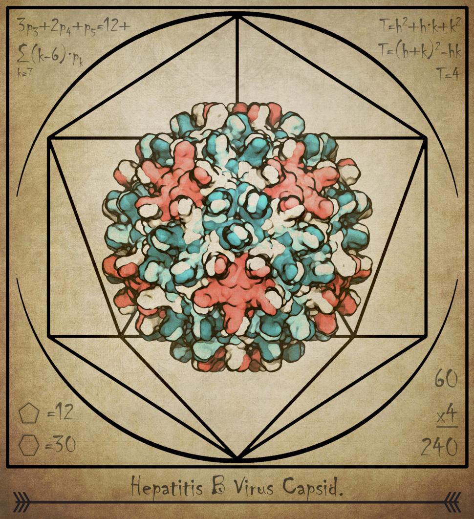 Vitruvian drawing of a hepatitis B virus