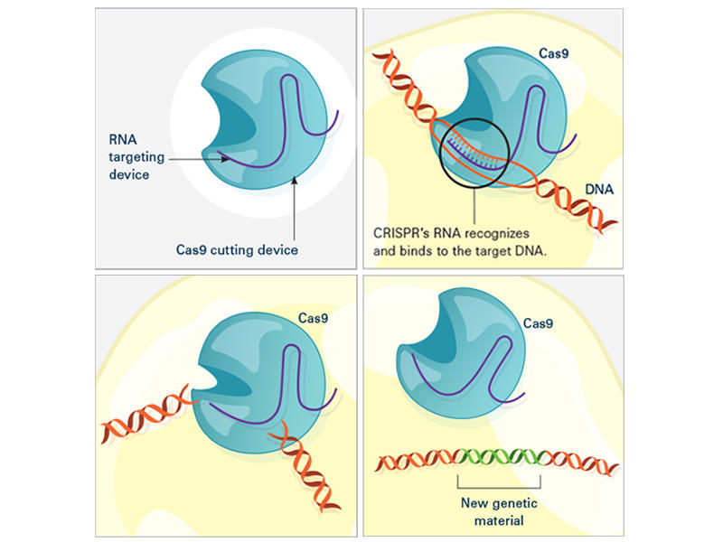 Cancer and genetic engineering. Cancer human genetic engineering, Publications