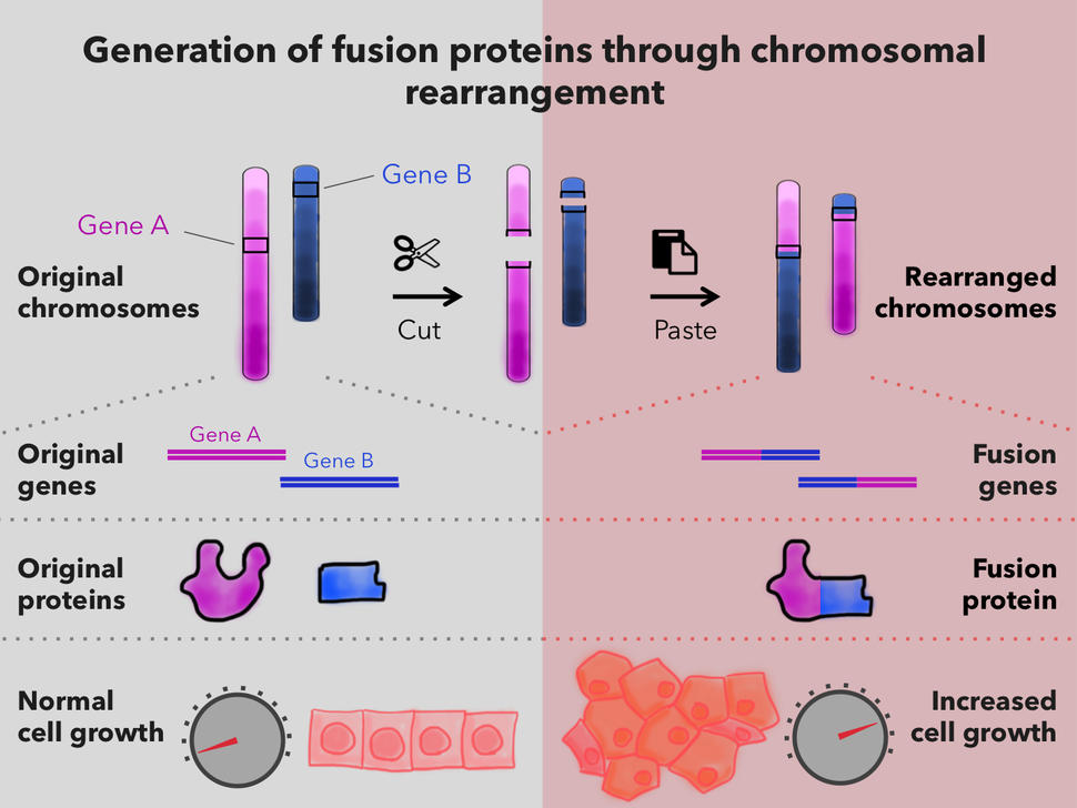 Generation of Fusion Proteins Through Chromosomal Rearrangement