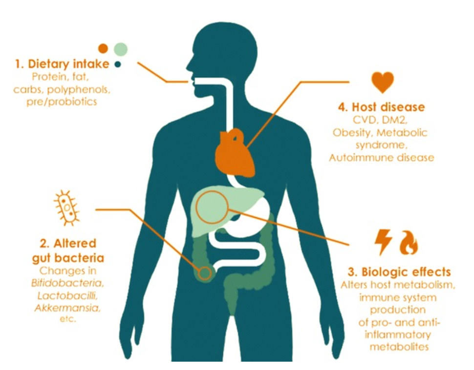 An illustration of how the gut microbiome influences health.