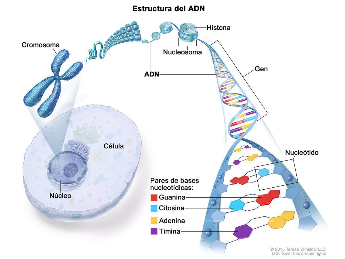 Genética Del Cáncer Instituto Nacional Del Cáncer