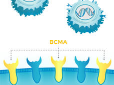 Illustration of BCMA Receptors & CAR T Cells