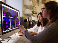 Two female scientists view series of cell images on computer monitor